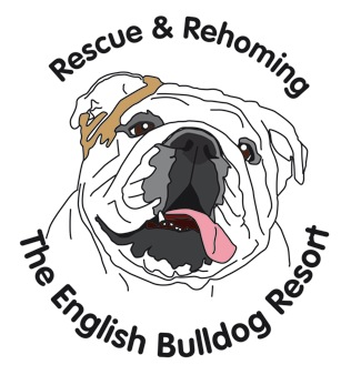 English Bulldog Resort
